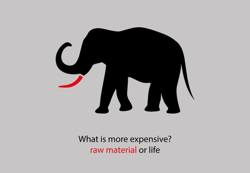 raw material – elephant
